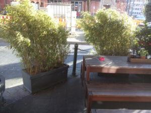 Bamboe in bakken op het terras