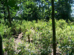 Niet woekerende bamboes kwekerij zon