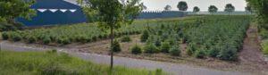 Nieuw stuk land, langs de n371 in Smilde. Bamboekwekerij Donker.